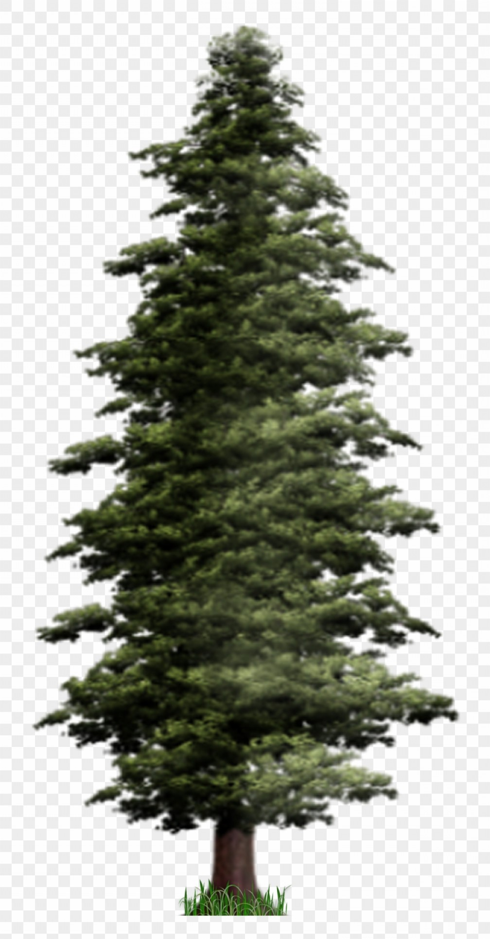 Migzmgnntall Pine Tree Silhouette Download Pine Png.
