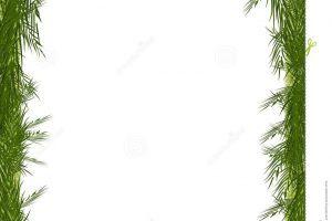 Pine tree border clipart » Clipart Portal.