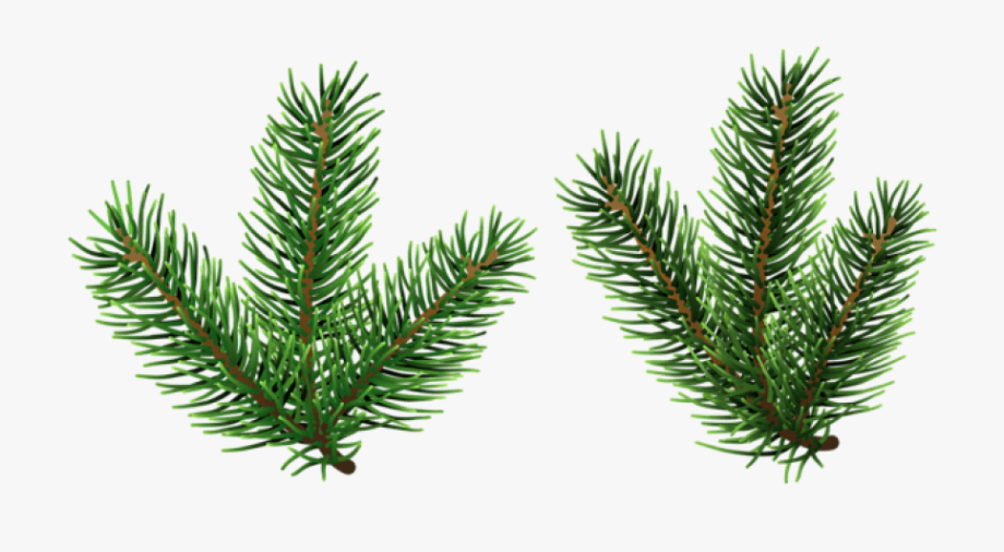 Pine Png Free Images.
