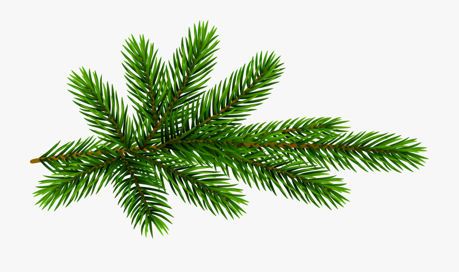Pine Tree Clipart Yew Tree , Transparent Cartoon, Free.