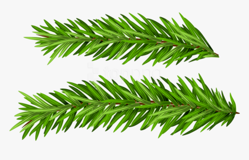 Free Png Pine Branches Set Png Images Transparent.