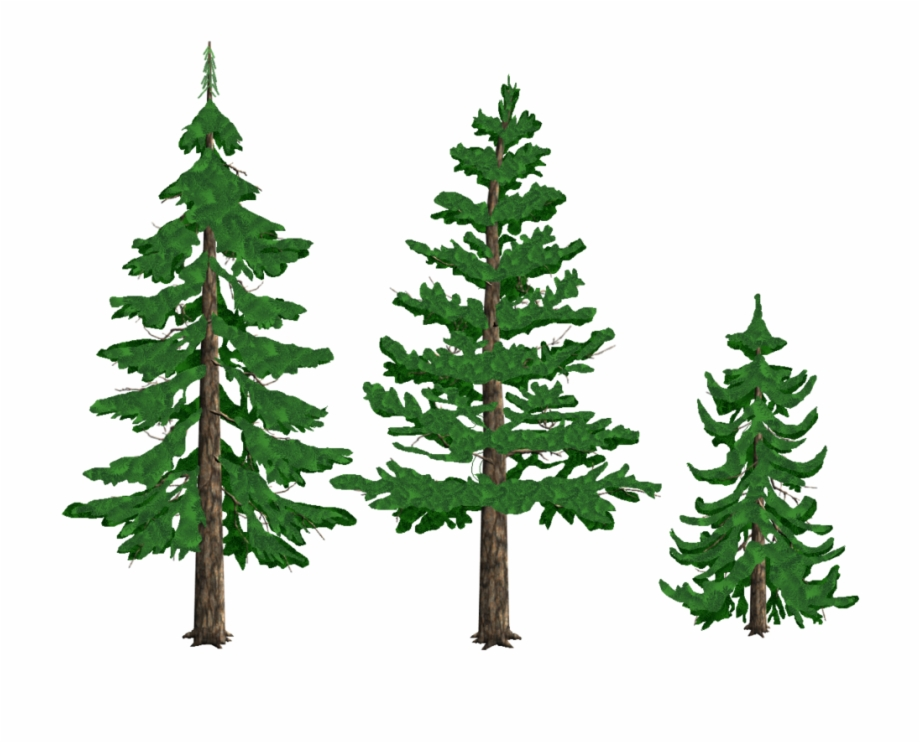 Transparent Background Pine Tree Clipart , Png Download.