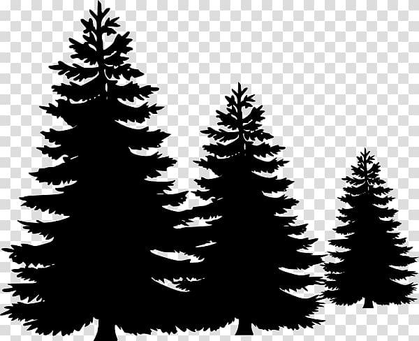 Pine Tree , Fir.