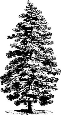 Black and white pine tree clip art free vector download.