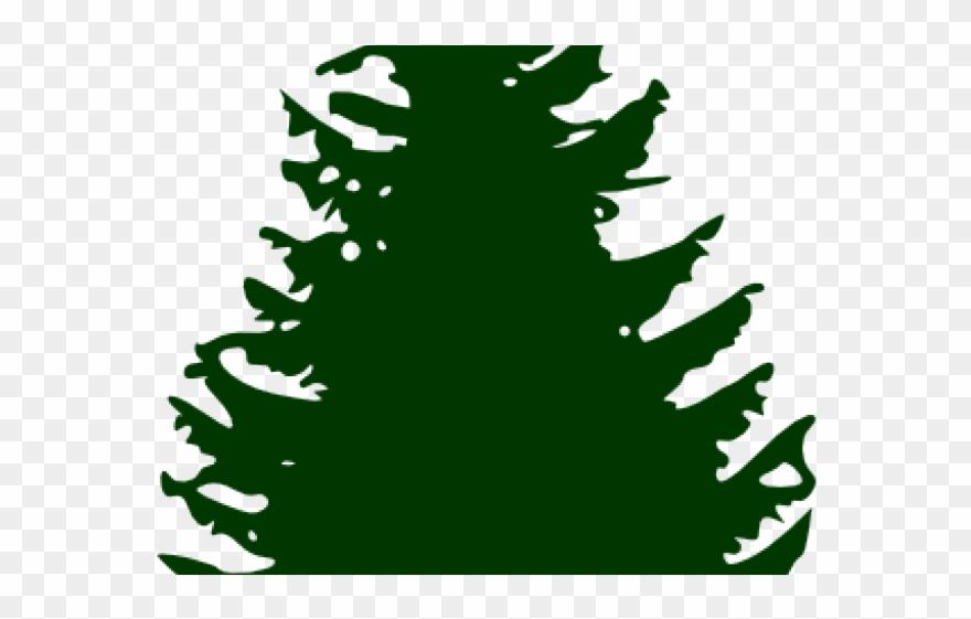 Fir Clipart Ashoka Tree.