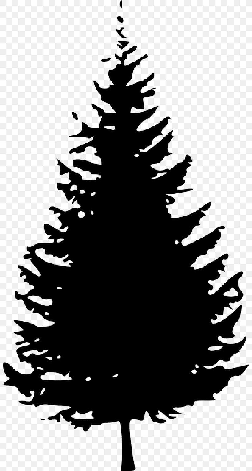 Clip Art Pine Tree Fir Vector Graphics, PNG, 800x1532px.