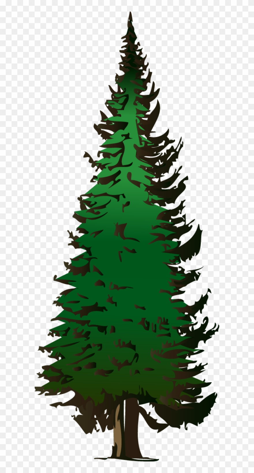 Pine Tree Vector Free Download.