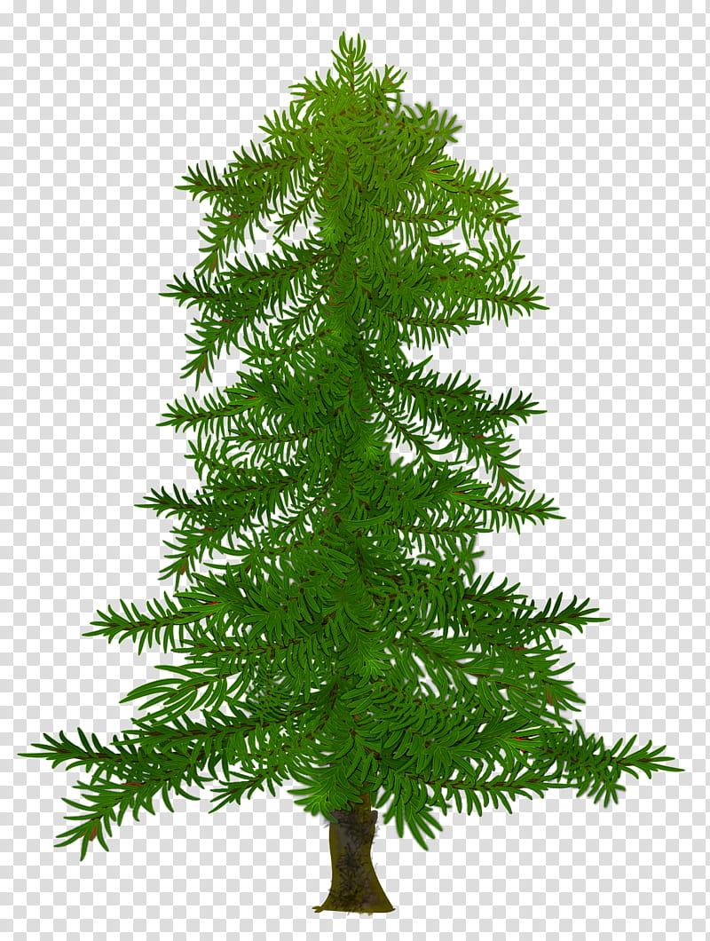 Christmas fir, green pine tree illustration transparent.