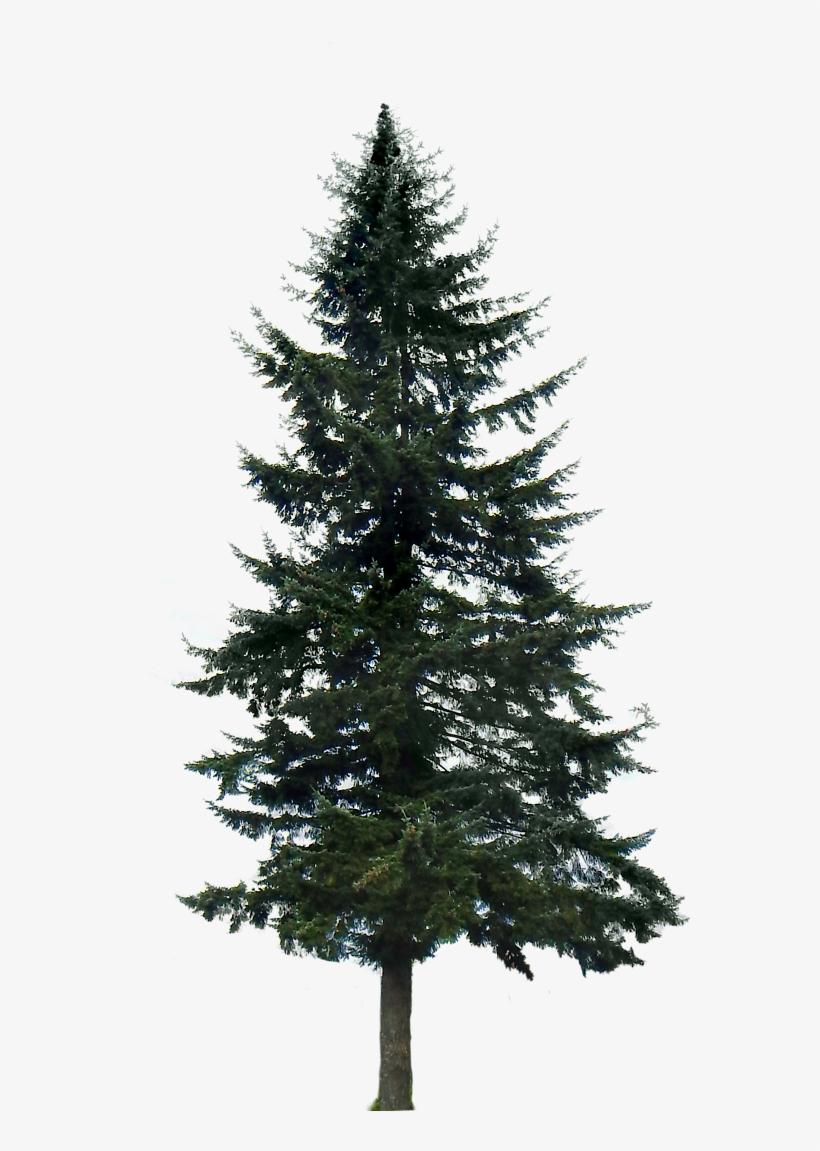 Pine Tree Png Image.