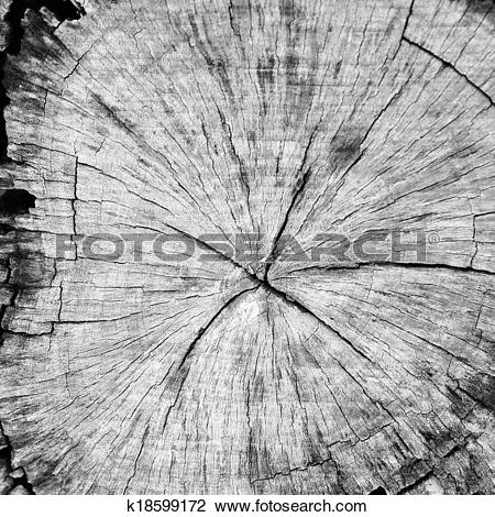 Stock Photo of Cross section of pine tree k18599172.