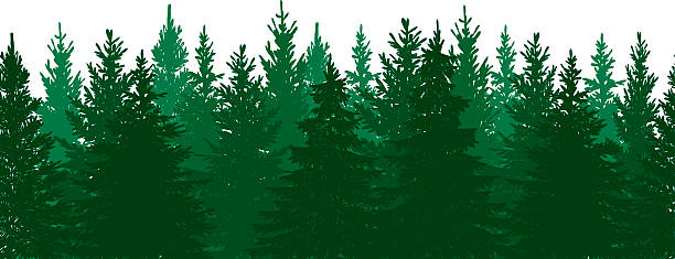 Pine Tree Forest Clipart.