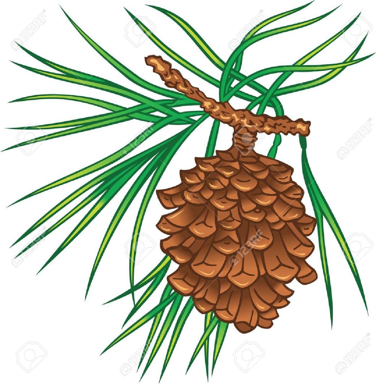 Pine tree needles clipart #10