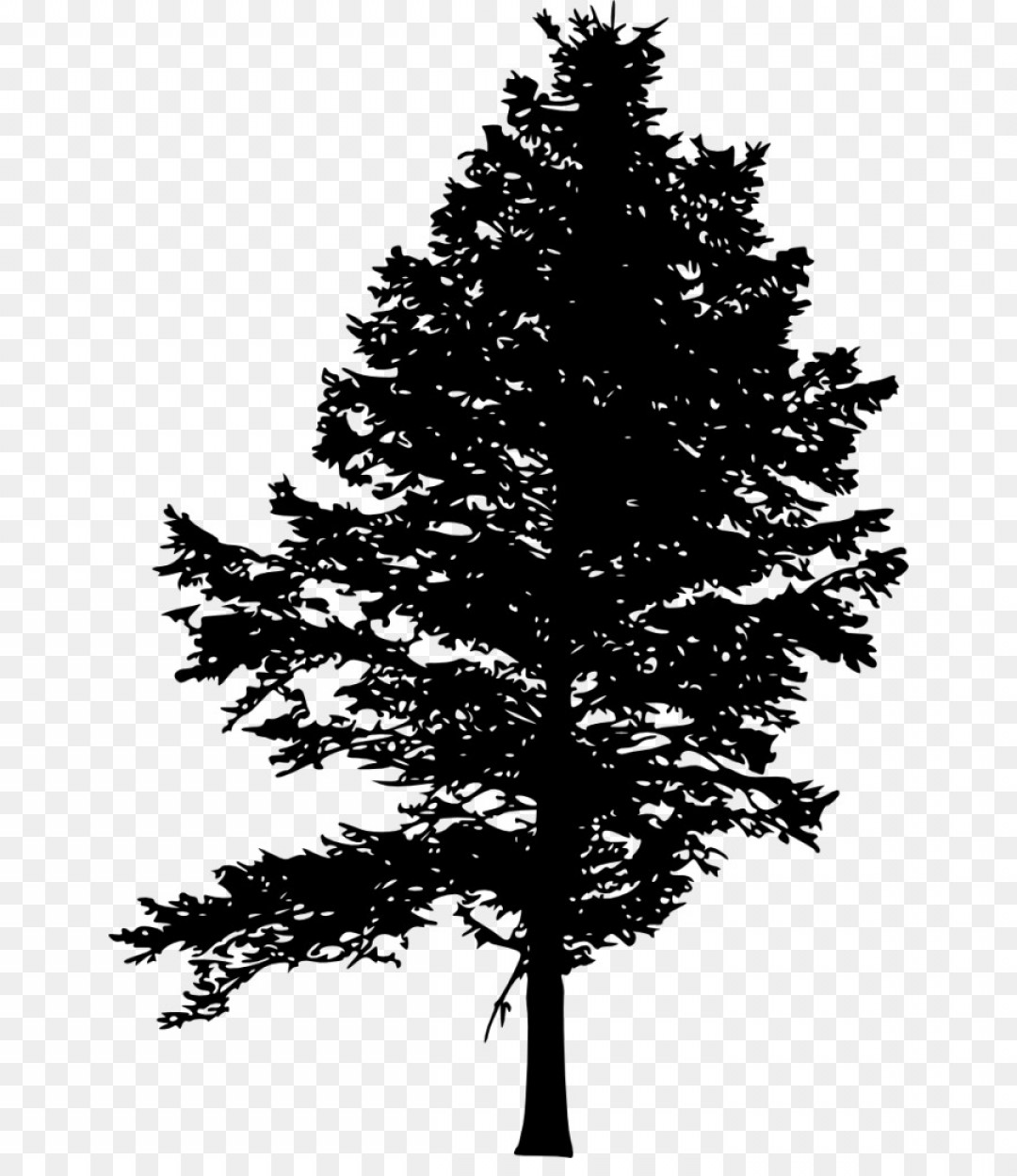 Png Pine Fir Tree Silhouette Drawing Pine Tree.