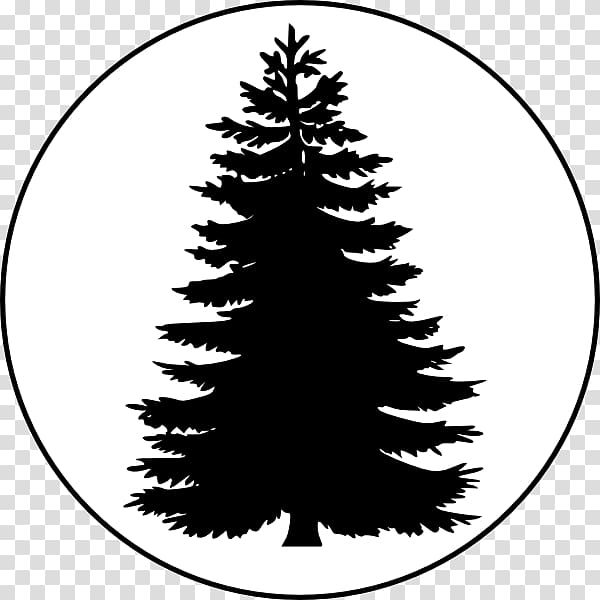 Pine Tree Conifers , Evergreen Tree Outline transparent.