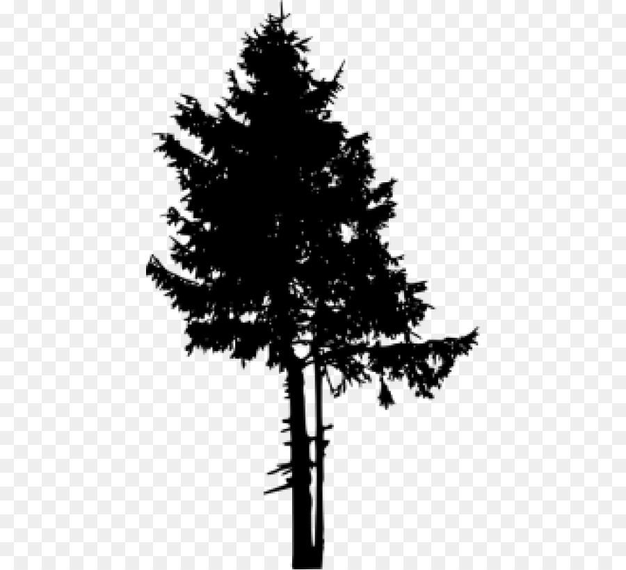 Pine Tree Conifers Clip art.