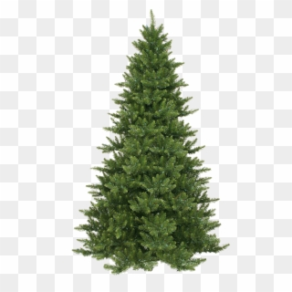 Pine Tree PNG Images, Free Transparent Image Download.