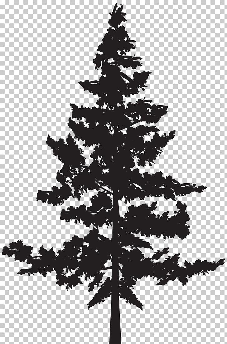 Black pine Tree Pinus contorta, Tree Silhouette , black tree.