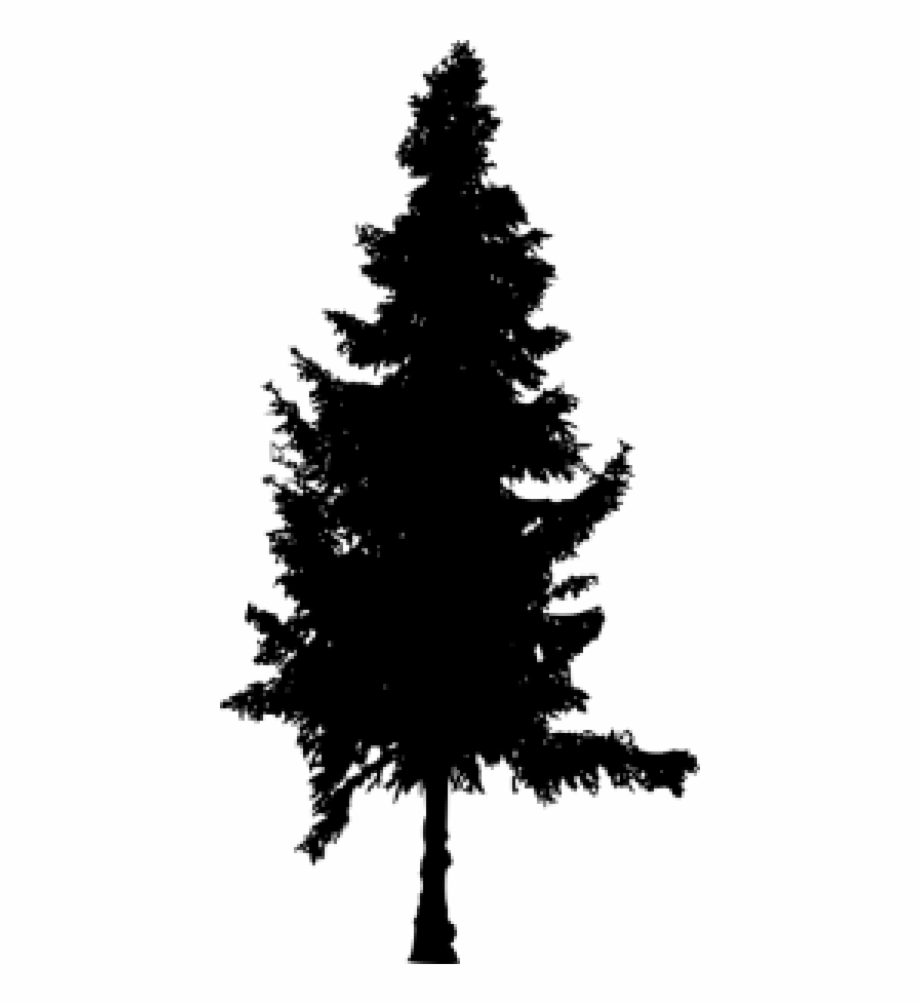 Pine Trees Silhouette Png Free PNG Images & Clipart Download.