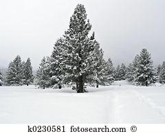 Snow pine tree Stock Photos and Images. 65,184 snow pine tree.