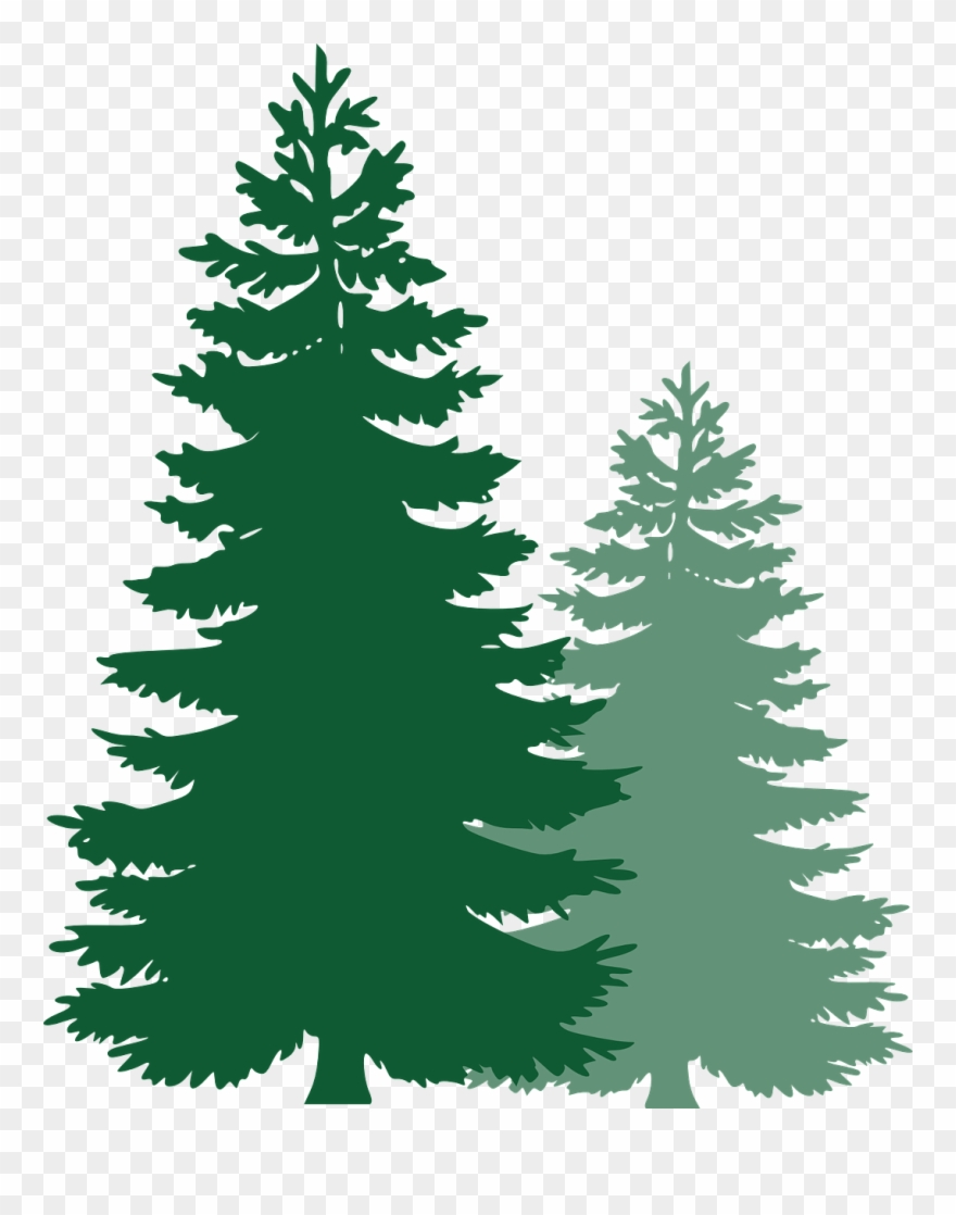 Pine Trees, Spruce Trees, Evergreen Trees, Tree, Spruce.