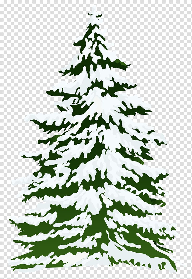 Pine tree covered with snow animated illustration, Pine Snow.
