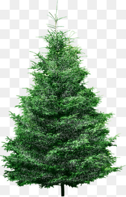Pine Tree PNG Images, Download 769 Pine Tree PNG Resources.