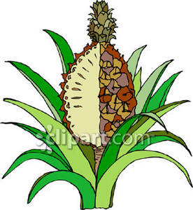Pineapple plant clipart.