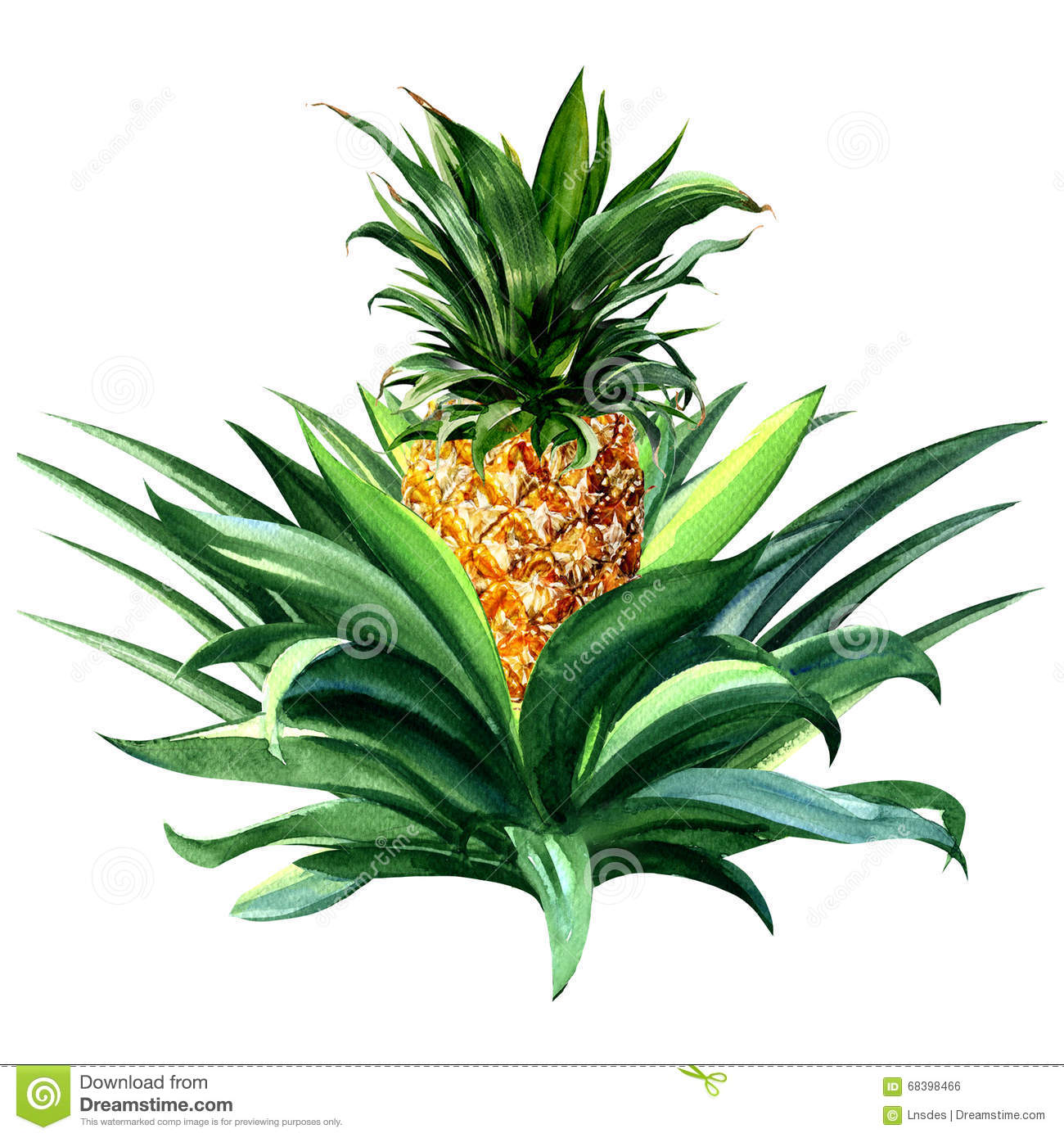 Pineapple plant clipart 20 free Cliparts   Download images ...