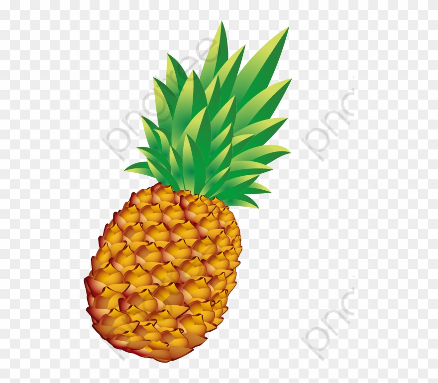 Pineapple Png Vector.