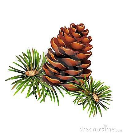 Pinecone clipart #1