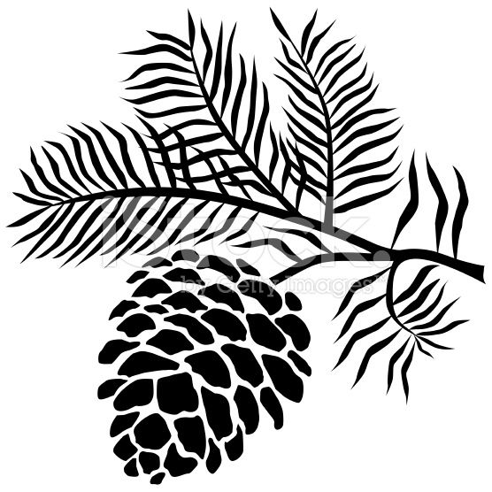 A vector illustration of pinecone on branch in black and.