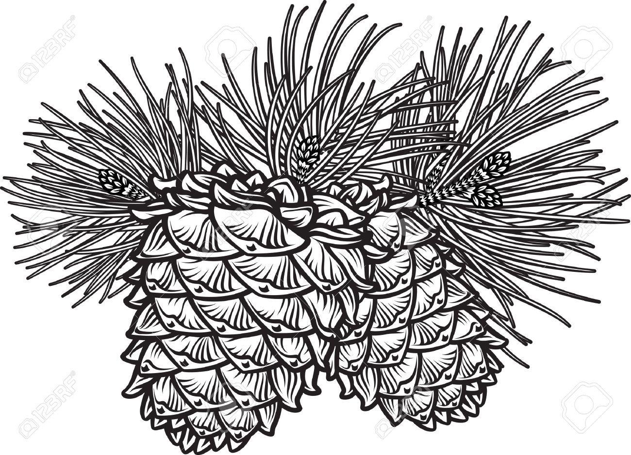 Pinecone clipart black and white 2 » Clipart Portal.