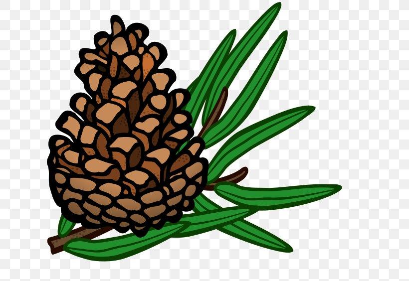 Conifer Cone Pine Clip Art, PNG, 640x564px, Conifer Cone.
