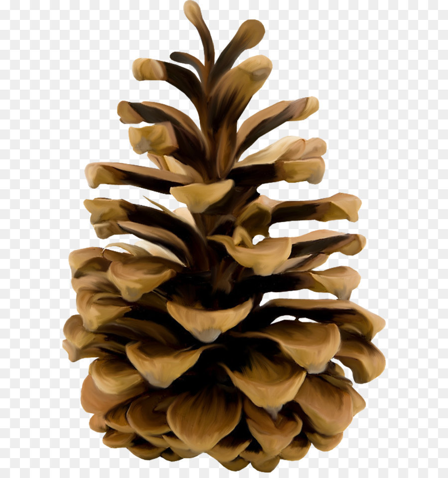 Clipart of pine cones 5 » Clipart Station.