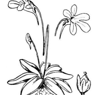 Checklist Flora.
