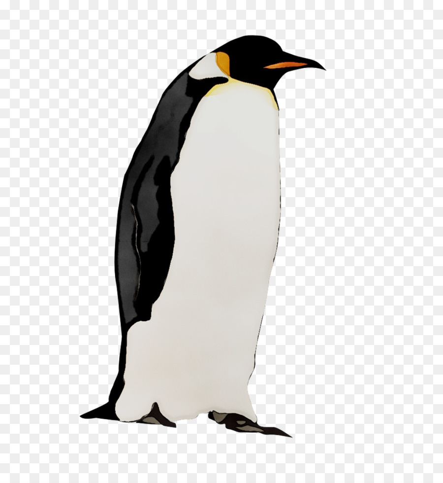 Pingüino Rey, Pingüino, La Fauna imagen png.