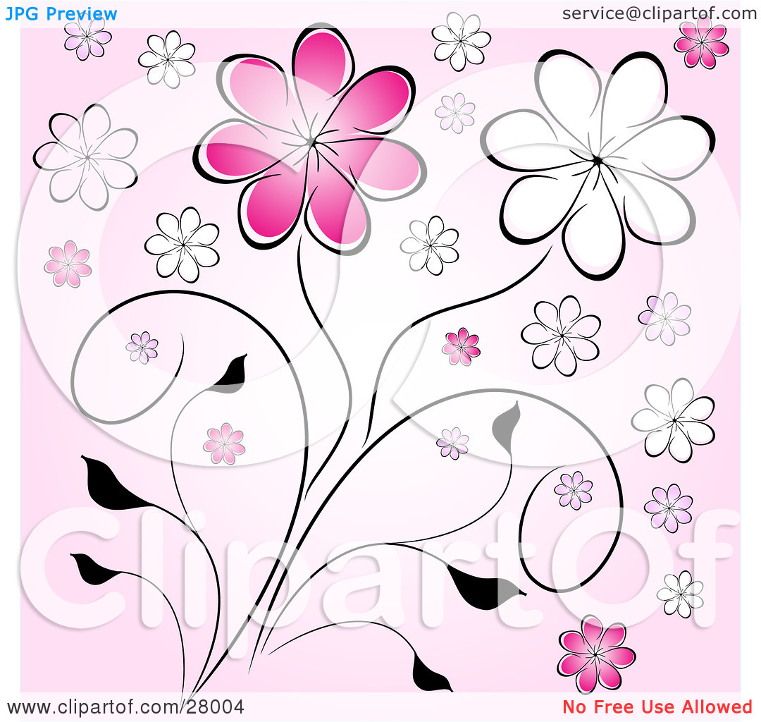 Clipart Illustration of Pink And White Daisy Flowers On Black.