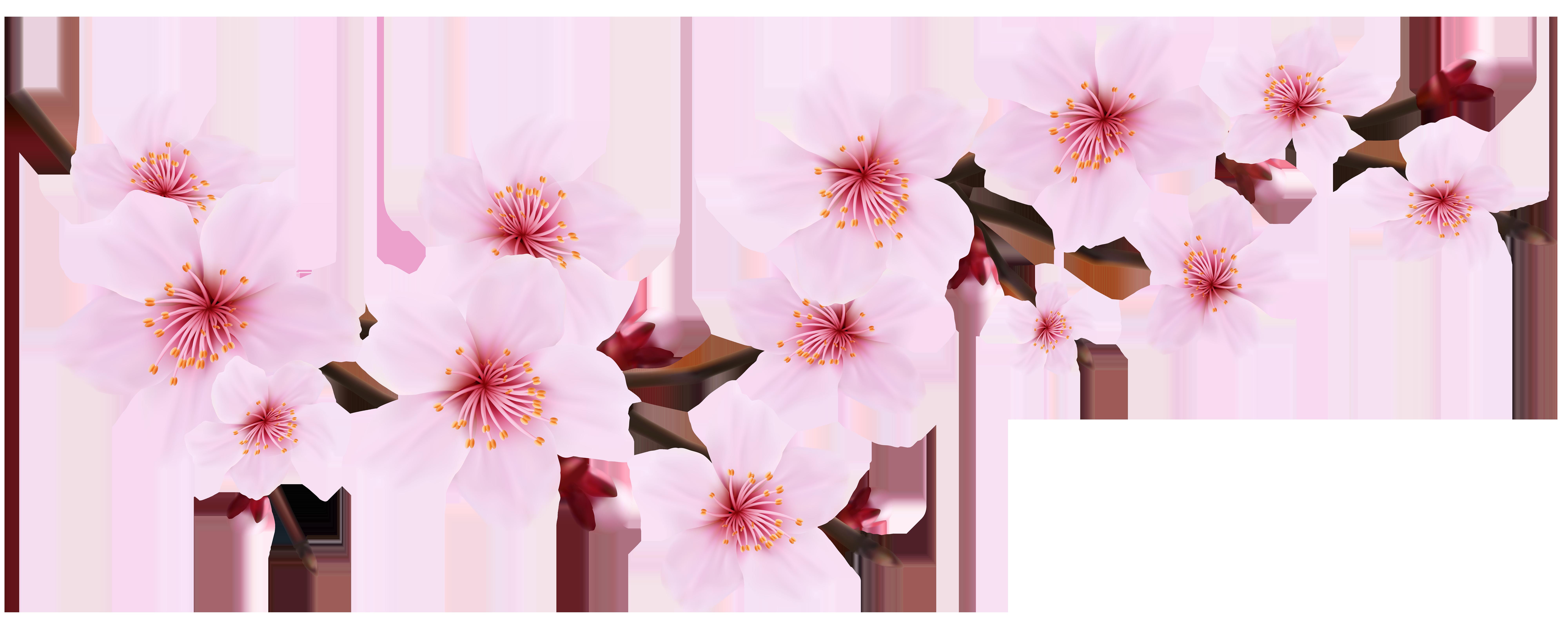Blossom Spring Pink Twig Transparent PNG Clip Art Image.