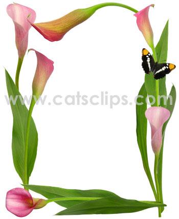 calla clipart lily.