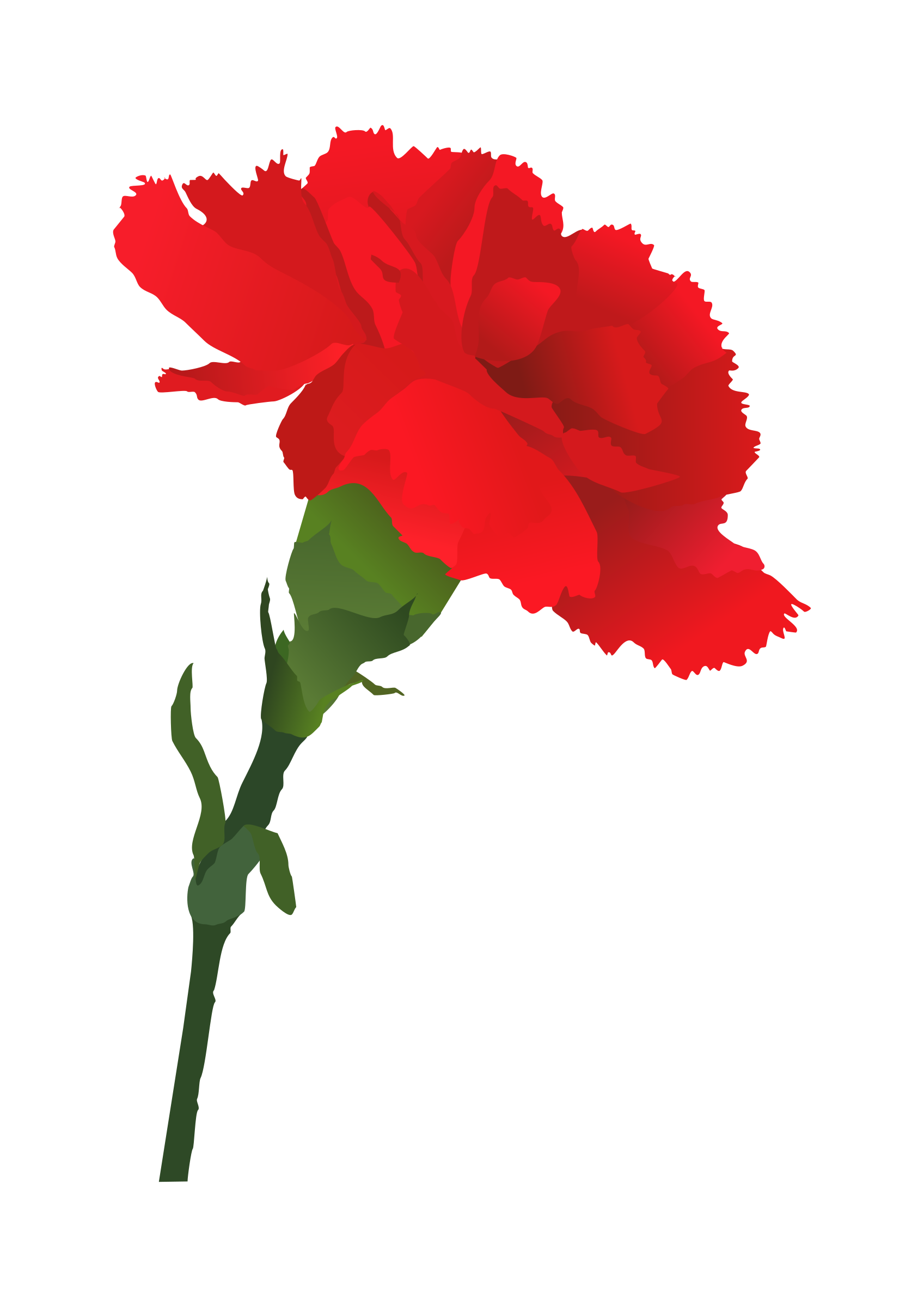 Pink carnation clip art clipart images gallery for free.