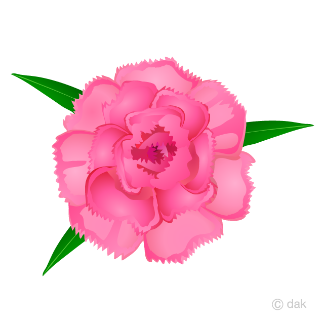 Carnation Flower Clipart Free Picture|Illustoon.