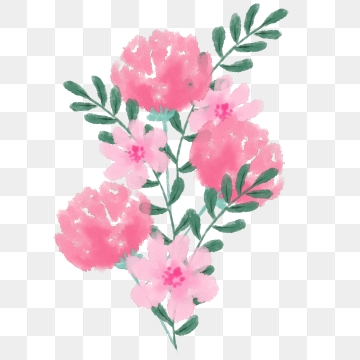 Pink Carnation Png, Vector, PSD, and Clipart With.