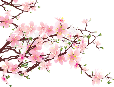 Cherry Blossom PNG HD Transparent Cherry Blossom HD.PNG.