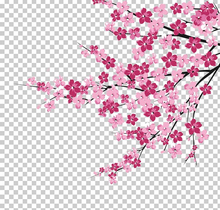 Cherry Blossom Pink PNG, Clipart, Blossom, Blossoms.