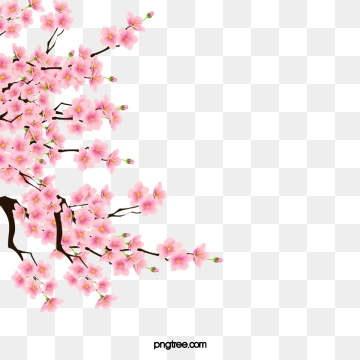 Cherry Blossom Png, Vector, PSD, and Clipart With.