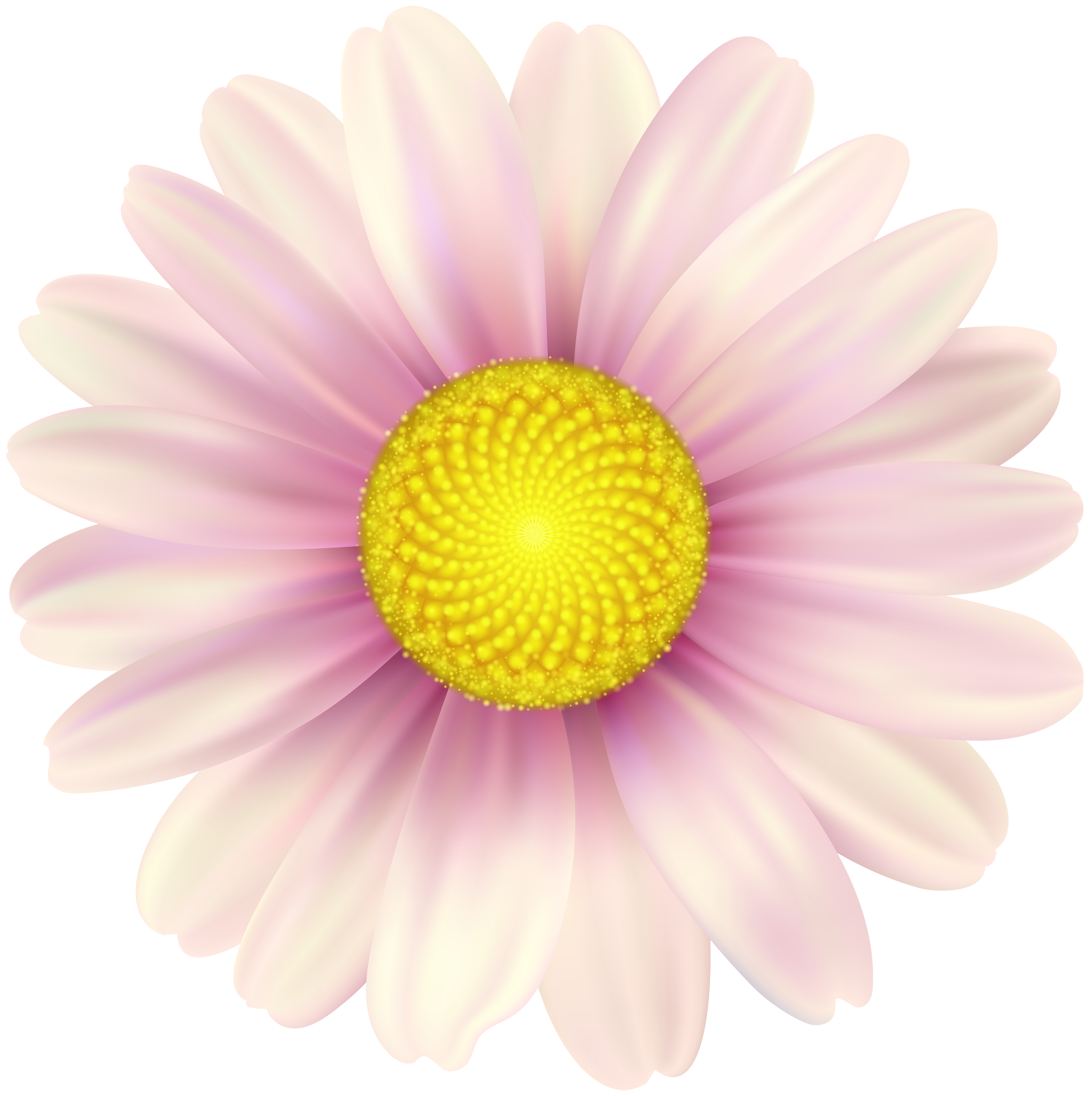 Pink Daisy Clip Art Image.