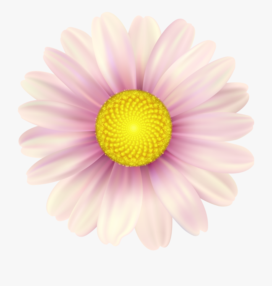 Pink Daisy Clip Art Image Gallery Yopriceville.