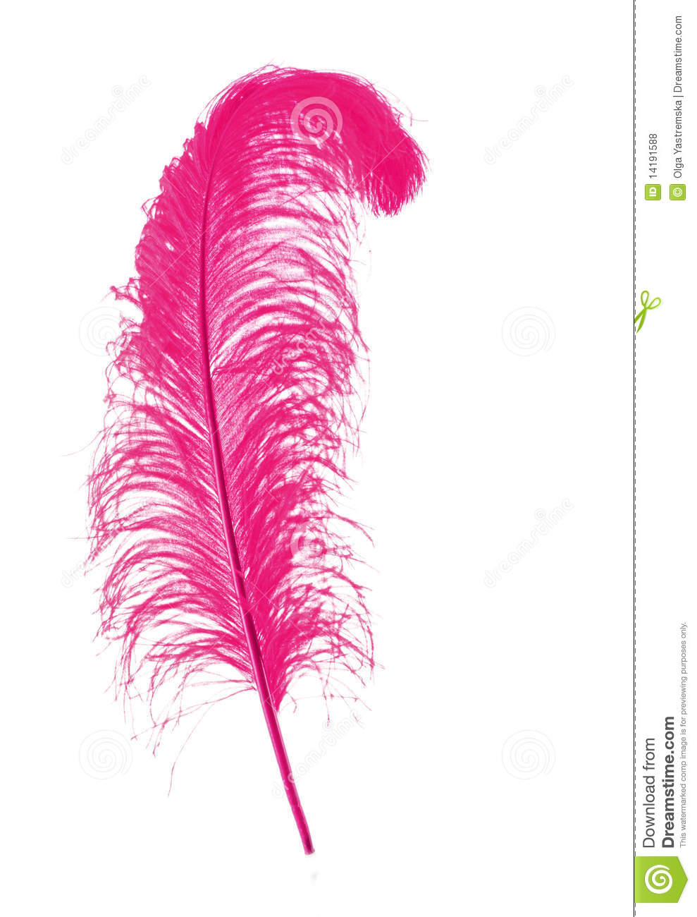 Pink peacock feather background