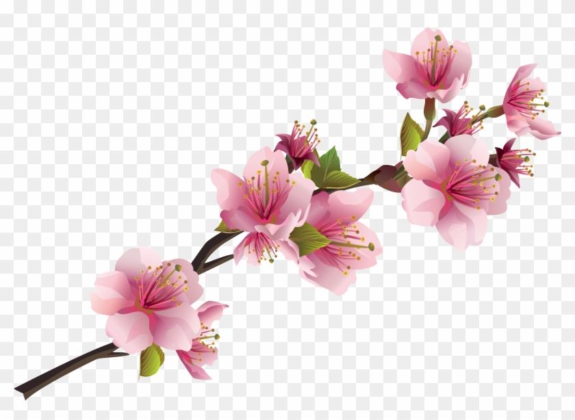 Sakura Pink Flowers Png Free Images.