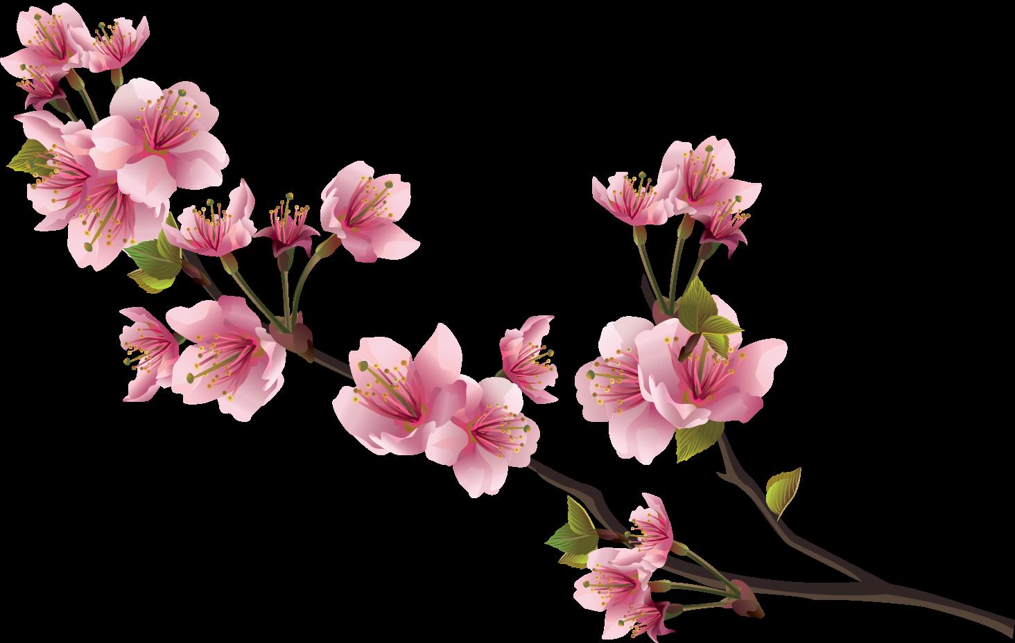 Sakura Pink Flowers PNG Image File.